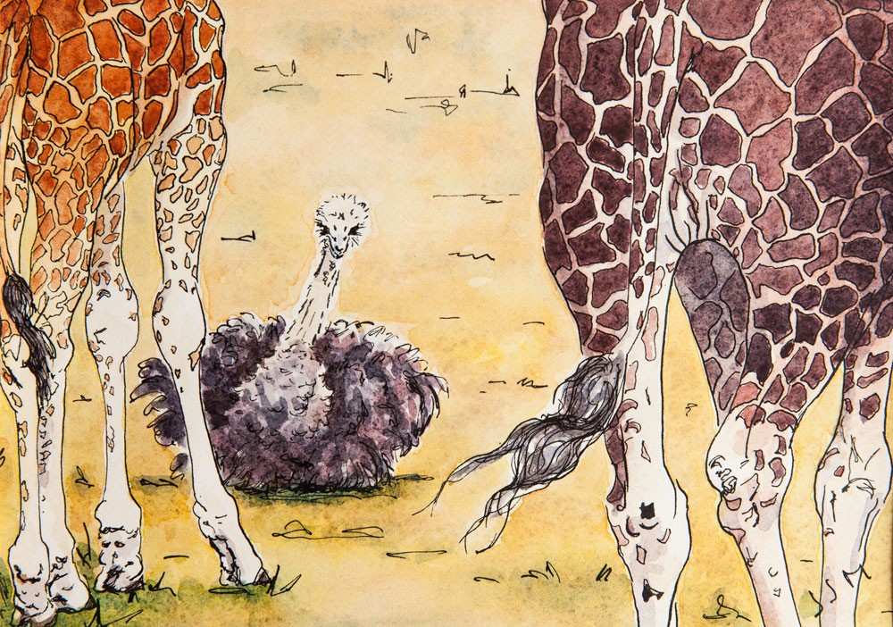 pen and watercolour drawing two giraffes and an ostrich
